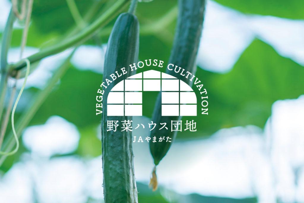 野菜ハウス団地 きゅうり